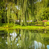 9-7-2020: Weeping willow reflections