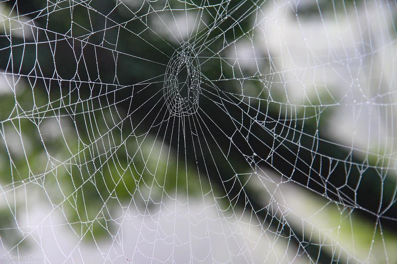 8-9-2020: SPiderwebs