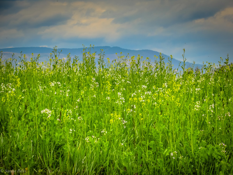 4-6-2020: A field, and the Alleghenies