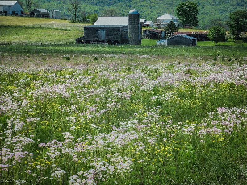5-12-2020: A beautiful field
