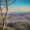 11-19-2020: On top of Turk Mountain
