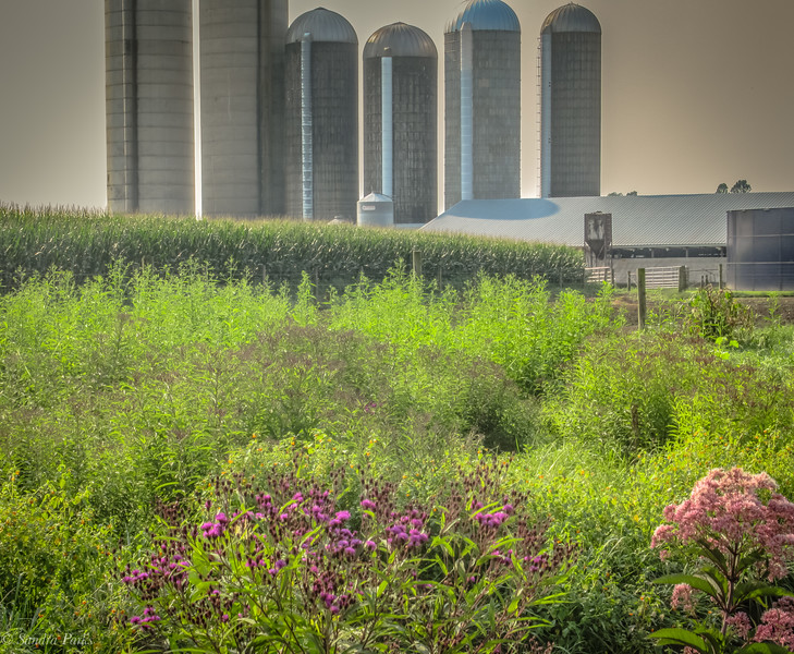 8-25-2020: wildflowers on Waggy's Creek