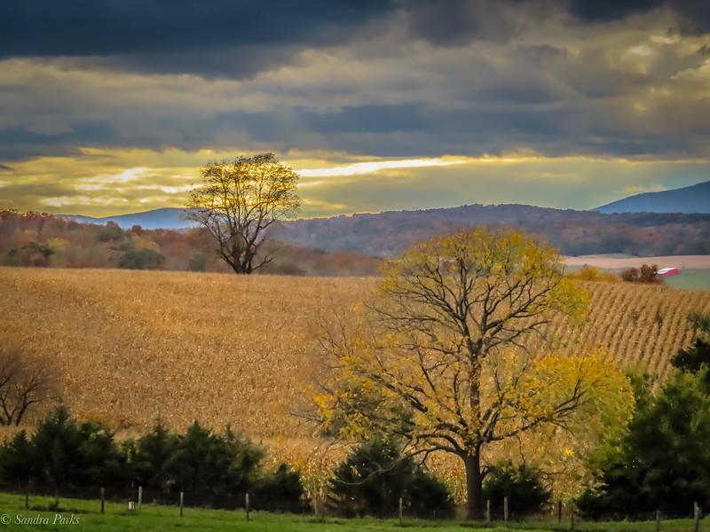 10-24-2020: The golden hour, Centerville