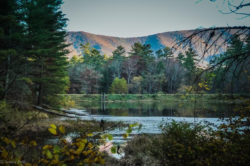 10-22-2020: Braley Pond