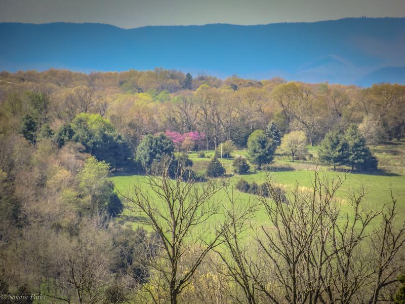 4-20-2020: Spring Hill