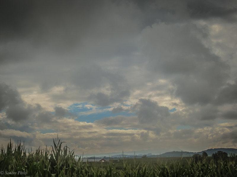 8-14-2020: COrn and clouds