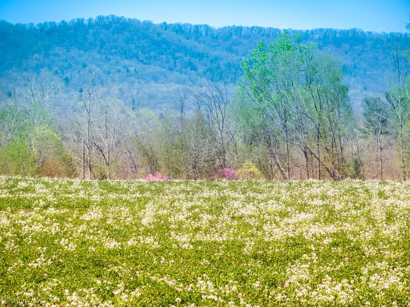 4-15-2020: Where my bike took me today, beyond Stokesville