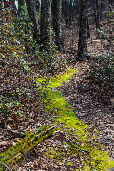 12-30-2020: The moss covered trail