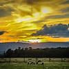 6-29-2020: SHeep at sunset
