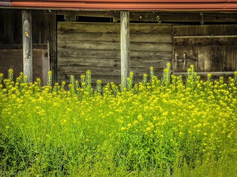 4-16-2020: an old barn