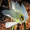 4-0202020: Tulip in the neverceasing wind