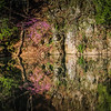 4-11-2020: Redbud, North River