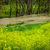 4-13-2020: Yellow field, muddy creek