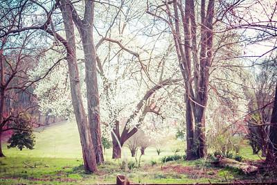 3-21-20202: A spring morning, Wildwood.
