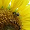 9-25-2020: Bee