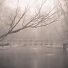 2-01-2020: Foggy bridge, Wildwood
