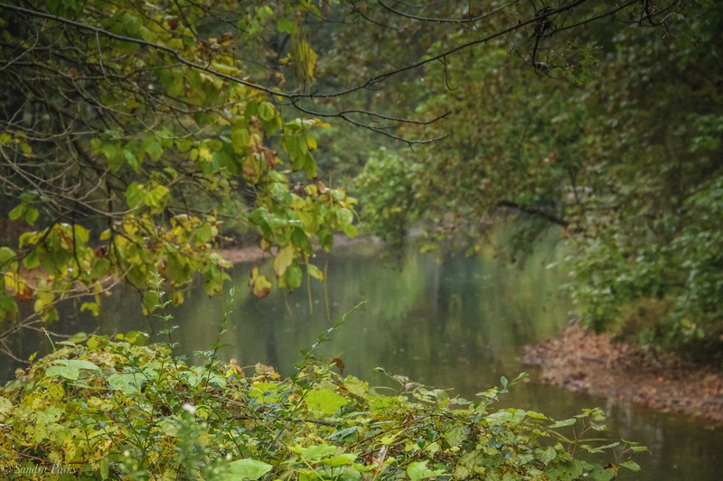 10-10-2020: Down by the river