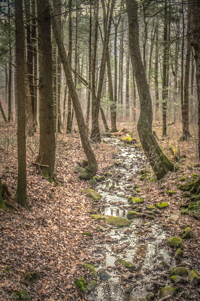 12-30-2020: Stream in the woods