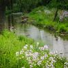 5-18-2020: Waggy's Creek