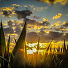 7-14-2020: Sunset in a cornfield