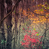11-22-2020: In the forest, the last of the color