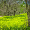 4-13-2020: Yellow field, muddy creek