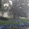 8-9-2020: SPiderwebs