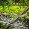 6-3-2020: Spring Creek