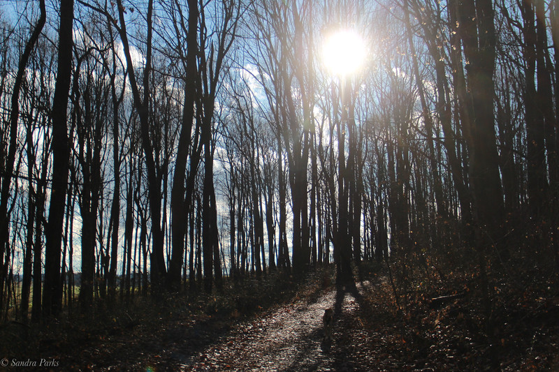 12-14-2020: Light in the forest