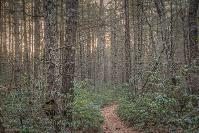 1-20-2020: The path ahead, today. Wolf Ridge