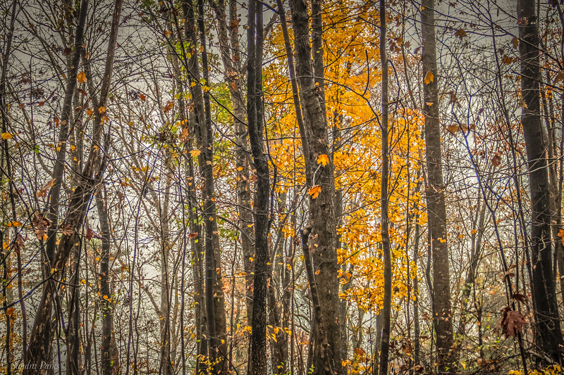 10-29-2020: Autumn woods