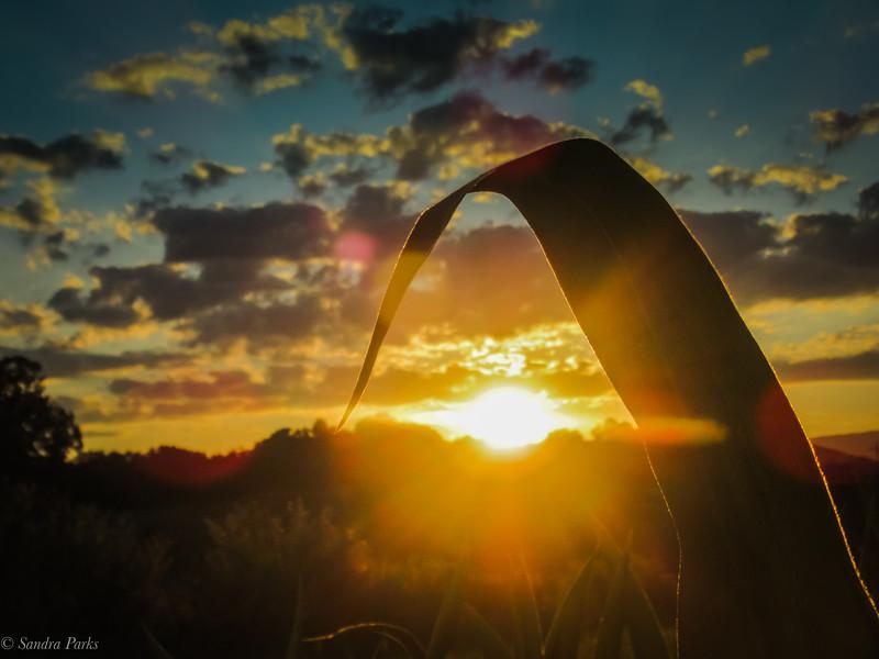 7-14-2020: Sunset in a cornfield