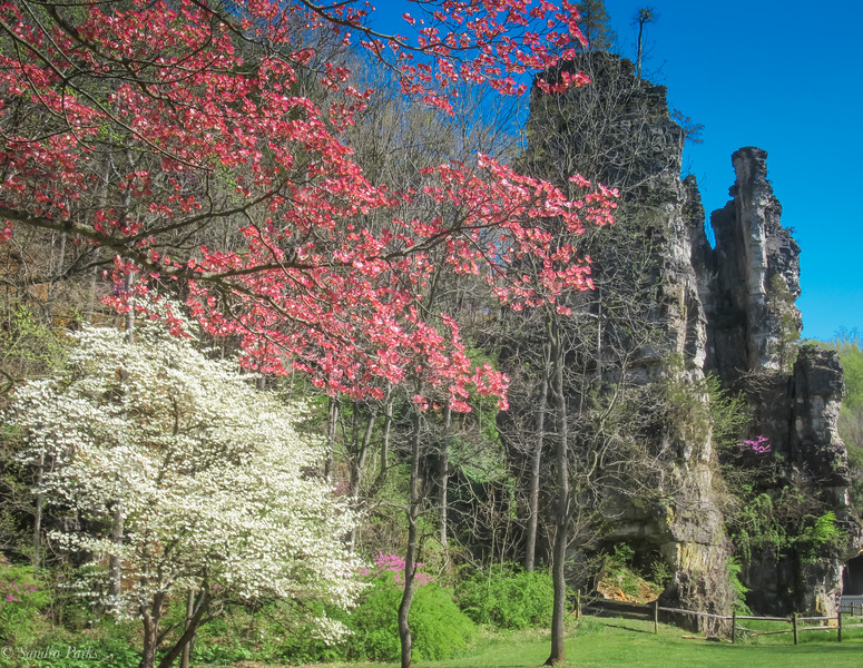 4-15-2020: The Chims in spring glory