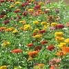 7-30-2020: Pick ypur own bouquet