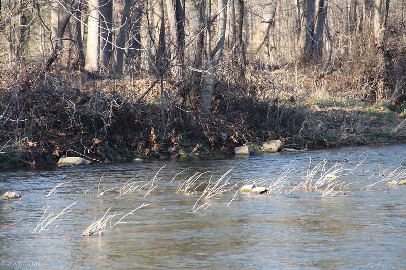 1-9-2021:  River grass
