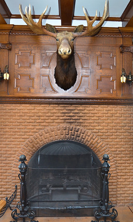 Moosehead over the fireplace