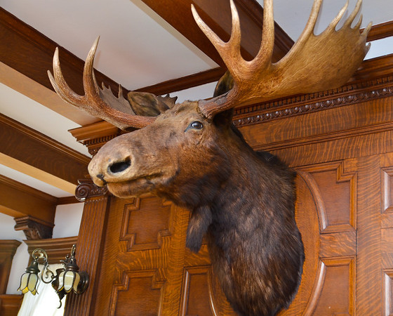Alaskan moosehead over the fireplace mantle