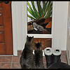 Two cats stalking a stained glass quail they'll never catch.
