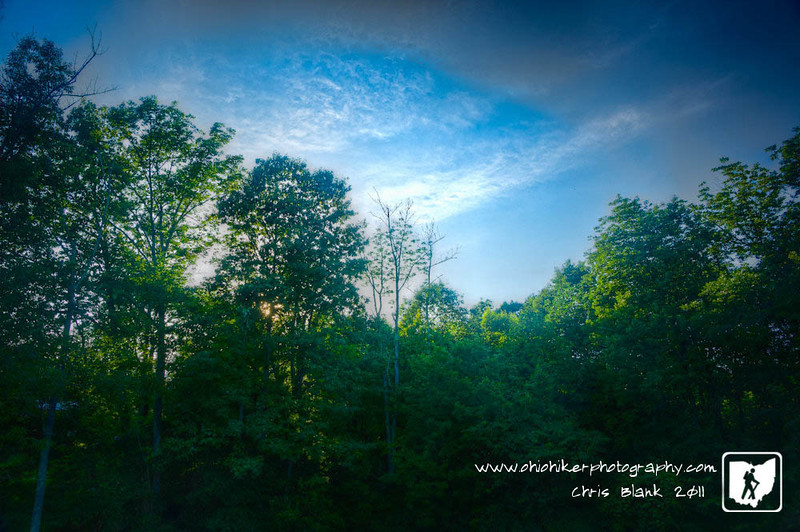 Day 303 of 365 - Evening at the Edge of Woods