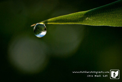 Day 312 of 365 - Dew Drop