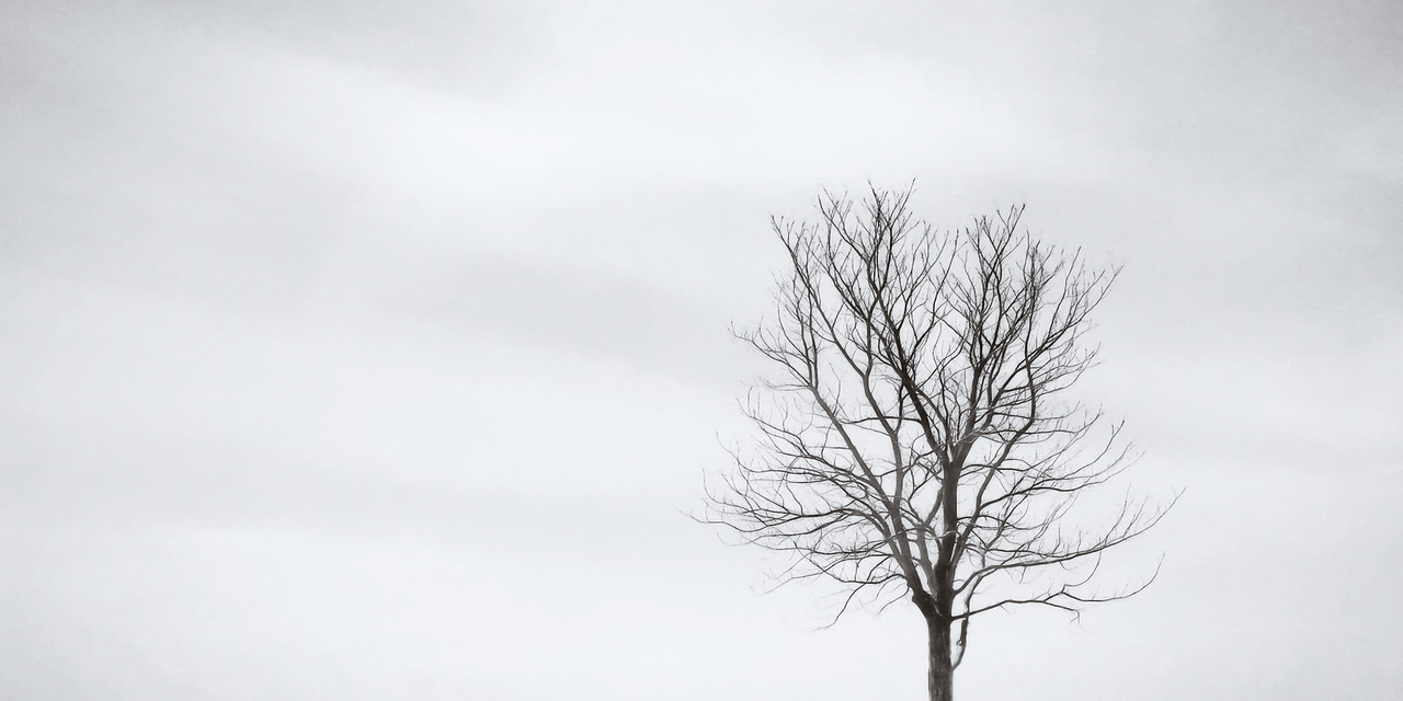 Black Tree White Sky