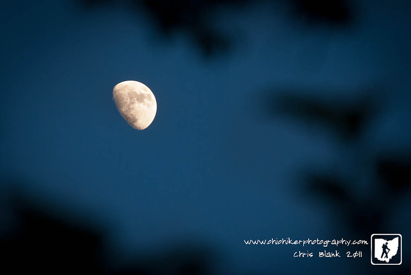 Tonight's waxing gibbous moon caught my eye this evening as I saw it through the trees this evening.