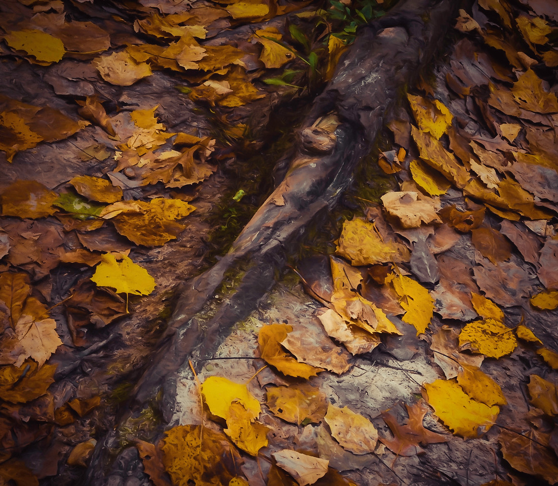 Autumn Leaves on the forest floor