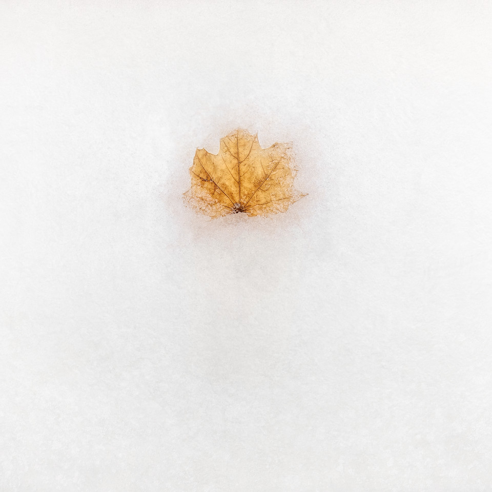 frozen time leaf ice snow photograph