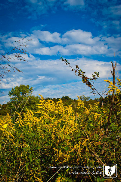 Fall is here and the Golden Rod is in full bloom.