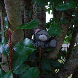 9/365 ~ 3/9/09 Kitty decided to climb a tree.