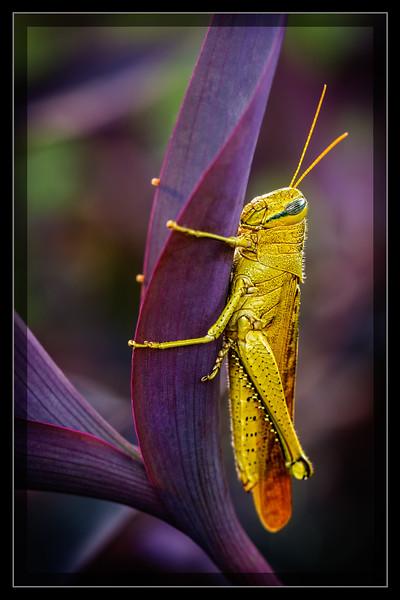 Grasshopper Grip