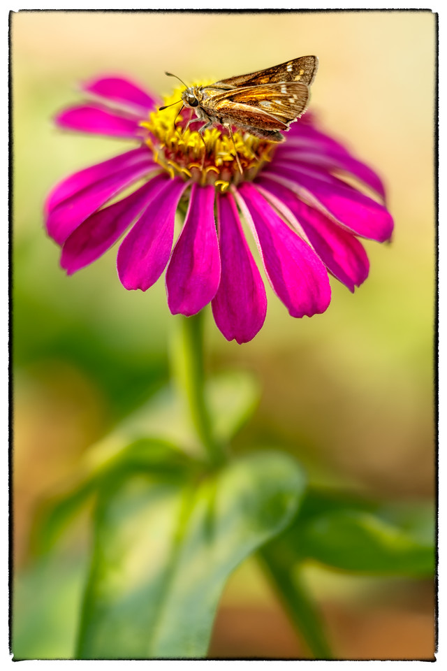 Sweet As Nectar