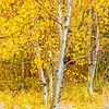 Aspen_Vertical-Sierra_Fall_2015Oct20_0534