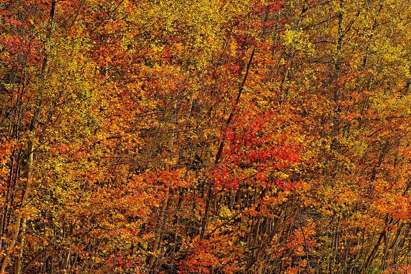 FallFoliageCompression